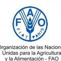 Aumenta-numero-de-personas-con-hambre-en-el-mundo-FAO